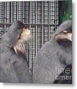 Thoughtful Monkeys Metal Print
