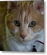 Thoughtful Tabby I Metal Print