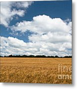 Thoughts Of A Wheatfield Metal Print