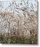 Thousands Of Shimmering Raindrops Metal Print