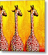 Three Amigos Giraffes Looking Back Metal Print