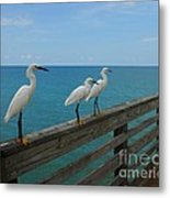 Three Amigos Metal Print by Mel Steinhauer