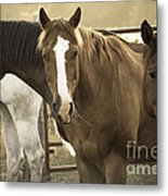 Three Amigos Metal Print by Steven Bateson