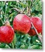 Three Apples On Tree Metal Print