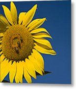 Three Bees And A Sunflower Metal Print
