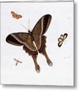 Three Butterflies And A Gnat Metal Print