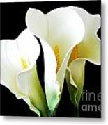 Three Calla Lilies On Black Metal Print