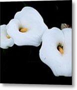 Three Calla Lilies Metal Print