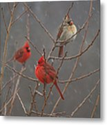 Three Cardinals Metal Print