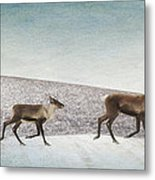 Three Caribous Metal Print by Priska Wettstein
