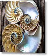 Three Chambered Nautilus Metal Print by Garry Gay