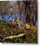 Three Cute Kit Foxes At Attention Metal Print