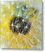 Three Dandelions In A Line Metal Print