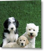 Three Diffferent Puppies Metal Print