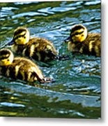 Three Ducklings Metal Print