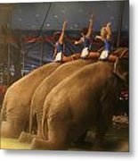 Three Elephants At The Circus Metal Print