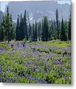 105417-three Fingered Jack And Wildflowers Metal Print