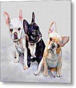 Three Frenchie Puppies Metal Print by Jane Schnetlage
