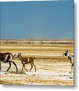 Three Goats In A Desert Metal Print
