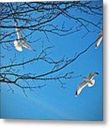 Three Gulls Metal Print
