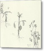 Three Herbs Metal Print