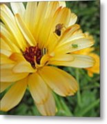 Three Insects And A Flower Metal Print