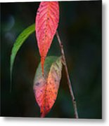 Three Leaves Of Fall Metal Print
