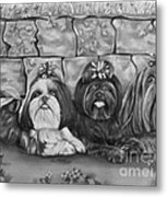 Three Little Shih Tzus Metal Print