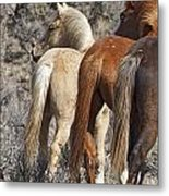 Three Long Tails Metal Print