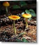 Three Orange Mushrooms Metal Print