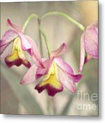 Three Orchid Beauties Metal Print