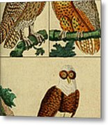 Three Owls Metal Print