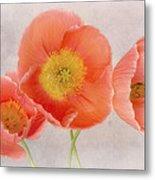 Three Peach Poppies Metal Print