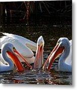 Three Pelicans And A Fish Metal Print
