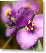 Three Petals Of Purple Metal Print by Alexandra  Rampolla
