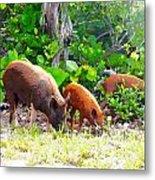 Three Pigs Metal Print