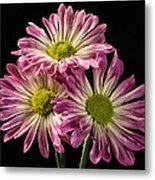 Three Pink Flowers Metal Print