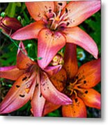 Three Pink Lilies Metal Print by Omaste Witkowski