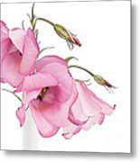 Three Pink Lisianthus Flowers Metal Print