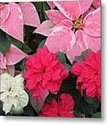 Three Pink Poinsettias Metal Print
