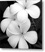 Three Plumeria Flowers In Black And White Metal Print