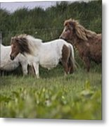 Three Ponies Metal Print
