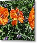Three Poppies Metal Print by Claudette Bujold-Poirier