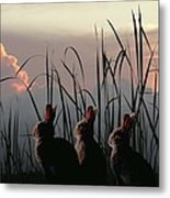 Three Rabbits In The Setting Sun Metal Print
