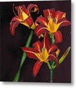 Three Red Daylilies Metal Print