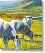 Three Sheep On A Devon Cliff Top Metal Print