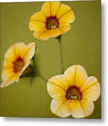 Three Sisters Metal Print by John Hamlon