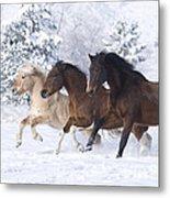 Three Snow Horses Metal Print