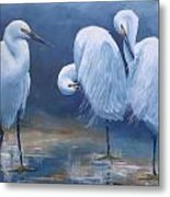 Three Snowy Egrets Metal Print
