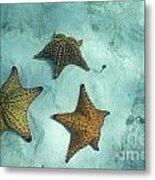 Three Starfishes On Sandy Seabed Metal Print